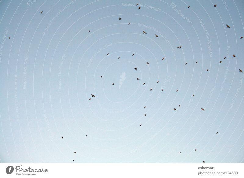 Vogelzug Natur Himmel blau Ferien & Urlaub & Reisen Tier Ferne Bewegung wandern Luftverkehr mehrere Tourismus Ziel Vergänglichkeit Jahreszeiten tierisch