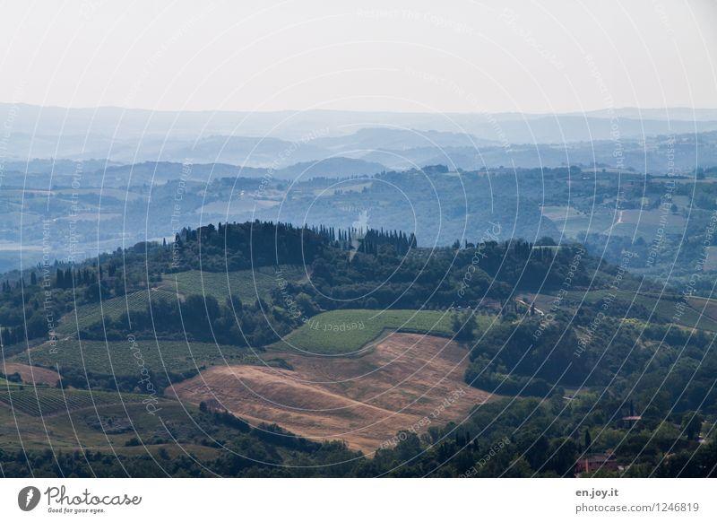 Chianti Gebiet Ferien & Urlaub & Reisen Tourismus Ferne Sommer Sommerurlaub Landwirtschaft Forstwirtschaft Umwelt Natur Landschaft Himmel Horizont Klima Feld