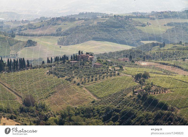 Falcon Crest Natur Ferien & Urlaub & Reisen grün Sommer Landschaft Ferne Feld Tourismus Idylle Klima Lebensfreude Italien Hügel Landwirtschaft Wein Bauernhof