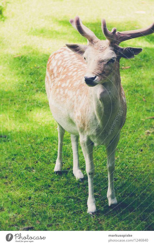 wild Ferien & Urlaub & Reisen Tier Freizeit & Hobby Tourismus Wildtier Ausflug Umweltschutz Zoo Bayern Nutztier Gehege Wildpark Damwild Mufflon Oberfranken Fränkische Schweiz