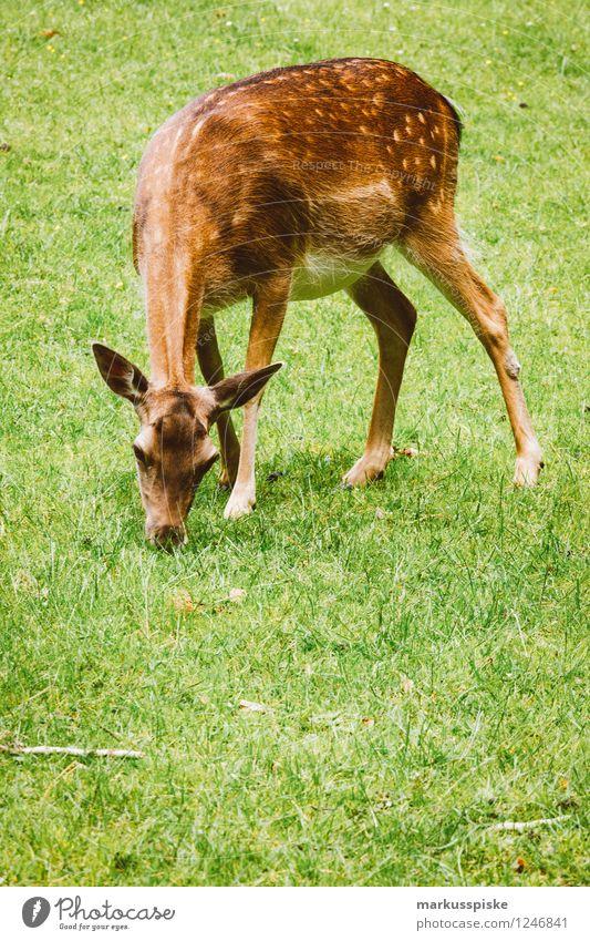 wild Kind Ferien & Urlaub & Reisen Tier Tourismus Wildtier Ausflug Kindergarten Fressen Bayern Kindererziehung Reh Gehege Wildpark Damwild Mufflon Oberfranken