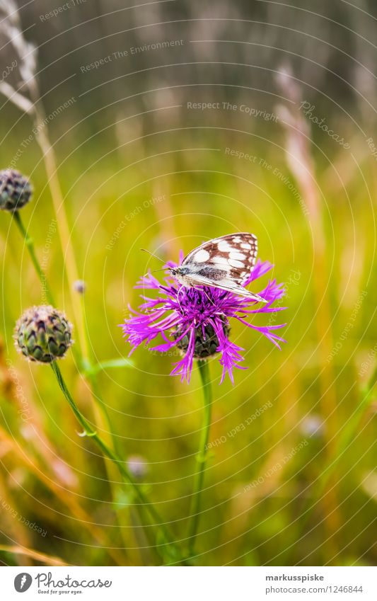 flieg Schmetterling, flieg.... Natur Ferien & Urlaub & Reisen Pflanze Sommer Blume Landschaft Tier Umwelt Blüte Wiese Gras Garten rosa Park Tourismus Fahrradtour