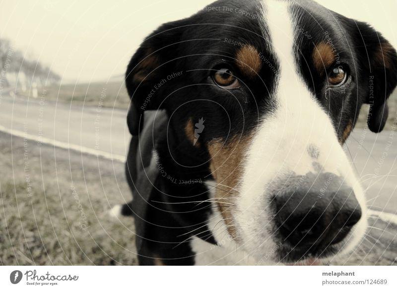 Gib mir Tiernamen. Auge Tier Straße Wiese grau Hund Wege & Pfade braun dreckig Umwelt Kommunizieren nah Vertrauen natürlich Neugier verfallen