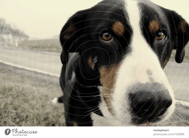 Gib mir Tiernamen. Umwelt Wiese Straße Wege & Pfade Hund 1 dreckig kuschlig nah natürlich Neugier niedlich braun grau Vertrauen Kommunizieren Schnauze