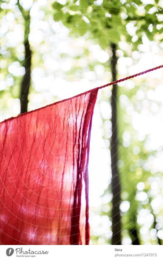 pZ3 l es war Sommer Umwelt Wald hängen Tuch Wäscheleine hell Baum Außenaufnahme Menschenleer Sonnenlicht Schwache Tiefenschärfe