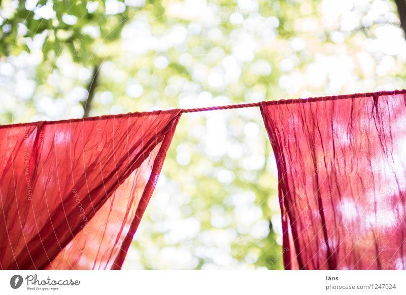 pZ3 l hereinspaziert Sonne Sommer Baum Wald Stoff rot Vorfreude Beginn Wäsche Wäscheleine hängend hängen lassen Hereinspaziert Menschenleer Textfreiraum oben