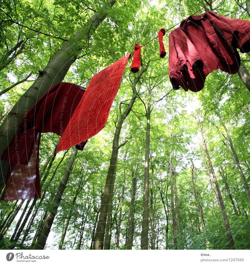PZ3 | Red Stuff Day grün Sommer Baum rot Blatt Wald Leben Kunst Dekoration & Verzierung modern verrückt ästhetisch Kreativität Schönes Wetter Neugier Zusammenhalt