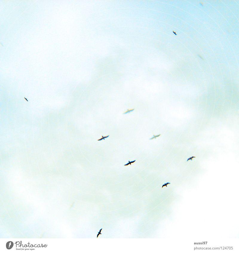 6 ? Himmel Vogel Wohnung fliegen Beginn Frieden Flugzeuglandung Ente Schweben Gans heimwärts wiederkommen Zugvogel