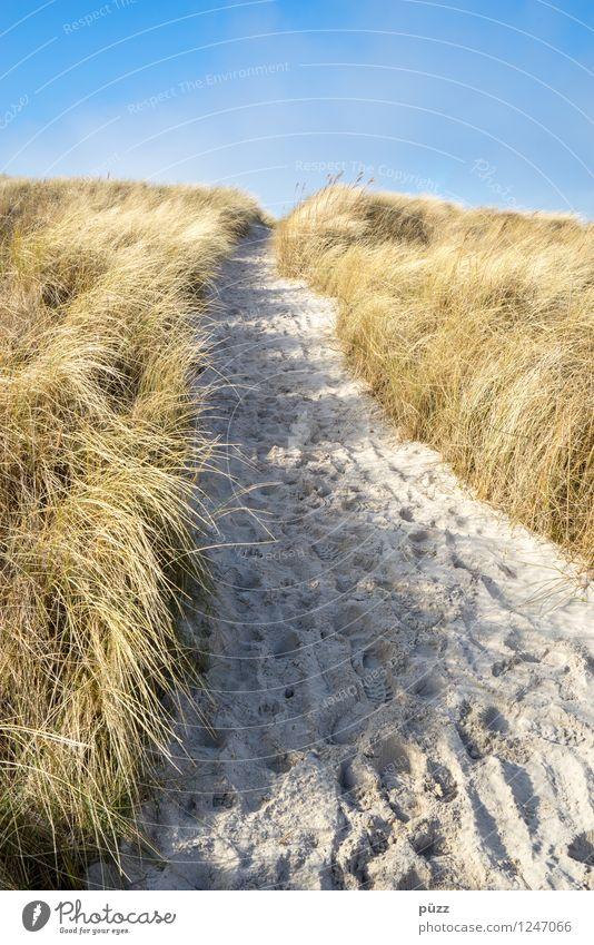 Strandweg Himmel Natur Ferien & Urlaub & Reisen Pflanze blau Sommer Sonne Erholung Meer Landschaft Ferne Strand gelb Gras Wege & Pfade Küste