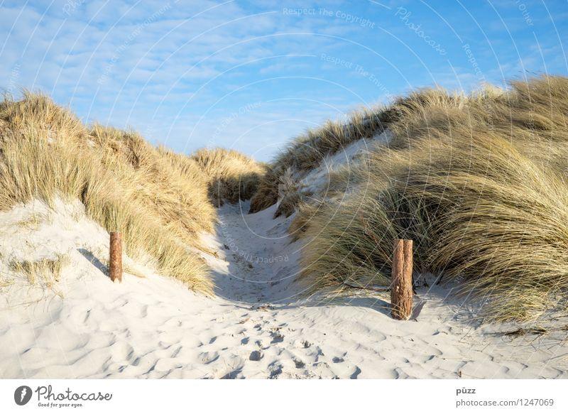To the beach Himmel Natur Ferien & Urlaub & Reisen Pflanze Sommer Sonne Erholung Meer Landschaft Strand Umwelt Gras Wege & Pfade Küste Freiheit Sand
