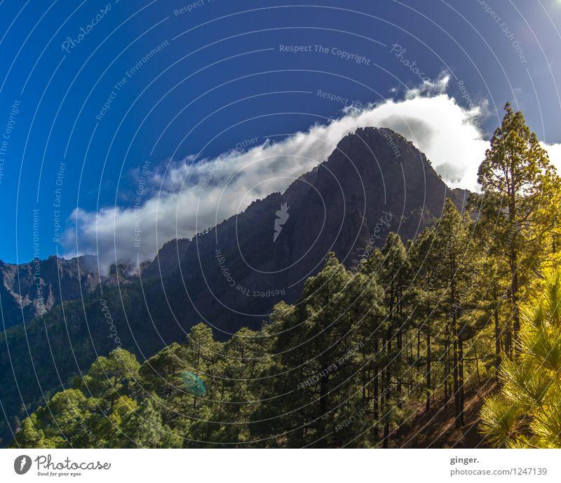 Tief durchatmen. Umwelt Natur Landschaft Pflanze Urelemente Luft Himmel Wolken Sonnenlicht Frühling Klima Wetter Schönes Wetter Wärme Baum Sträucher Wald Felsen