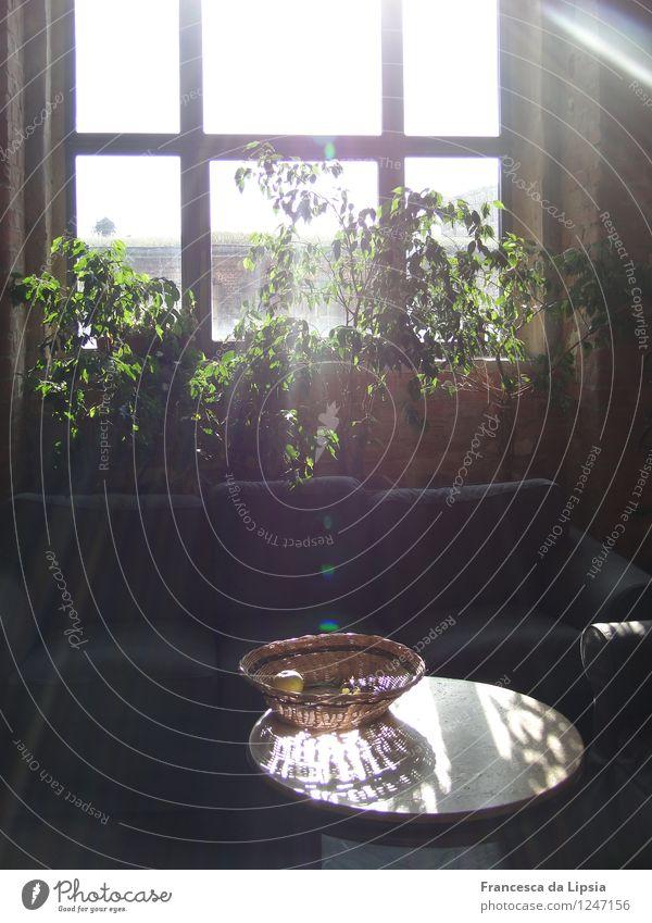 Erleuchtung grün weiß Gesunde Ernährung schwarz Gesundheit braun hell Frucht Häusliches Leben Tisch einfach Apfel Sofa Wohnzimmer Schalen & Schüsseln Diät