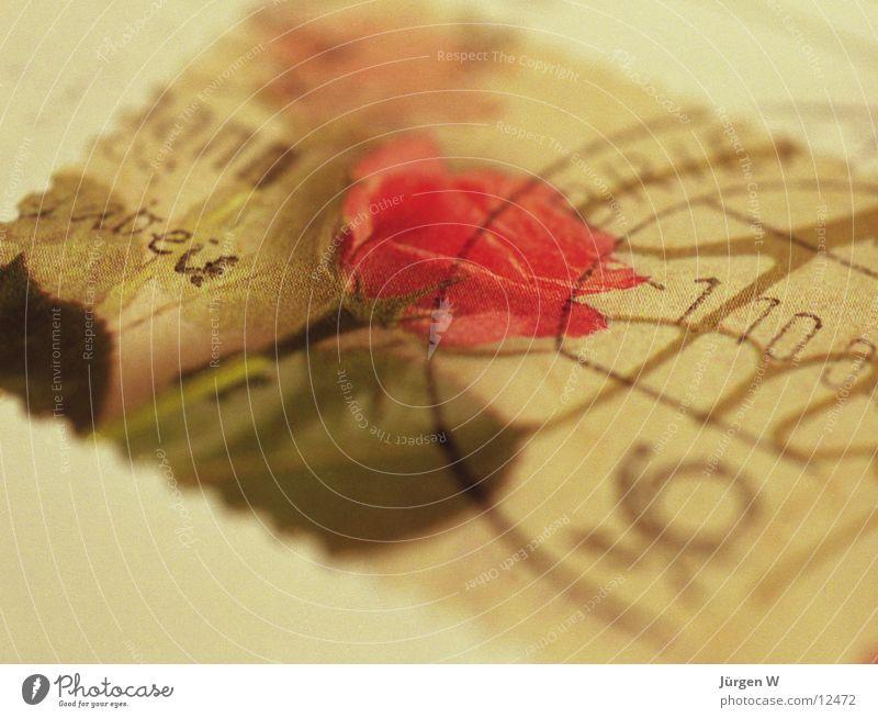 die Post ist da Brief Briefmarke Rose Unschärfe Nahaufnahme diffus Dinge Stempel Makroaufnahme Detailaufnahme letter stamp Valentinstag