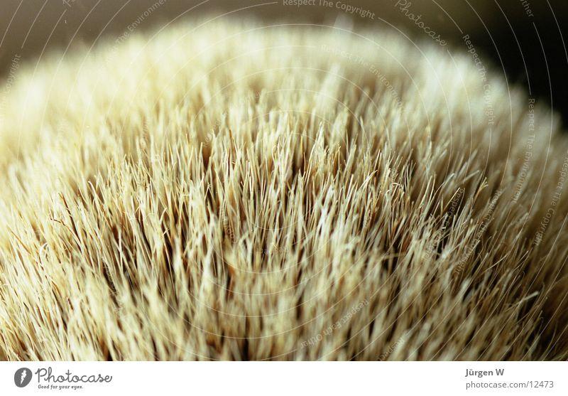 domestizierter Dachs Bad Rasieren Fell weich Nahaufnahme Häusliches Leben rasierpinsel Haare & Frisuren Makroaufnahme deail shaving brush bathroom skin softly