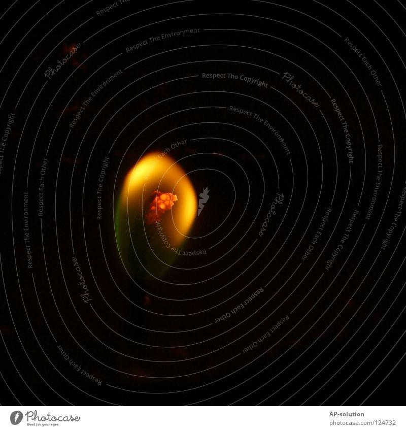 zarte Flamme schwarz gelb dunkel Wärme Beleuchtung orange Angst Brand Feuer Hoffnung Trauer Kerze Physik Wunsch Verzweiflung brennen