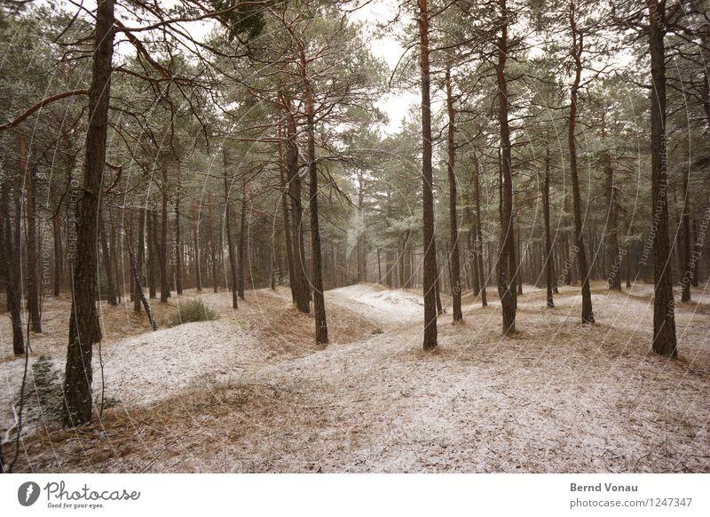 abkühlung Umwelt Natur Landschaft Winter Klima Wetter Schnee Baum Gras Wald Hügel wandern schön braun grau grün Kiefer gerade ruhig Waldlichtung Frost kalt