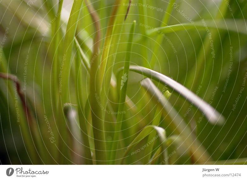 Schnittlauchwald grün Ernährung diffus