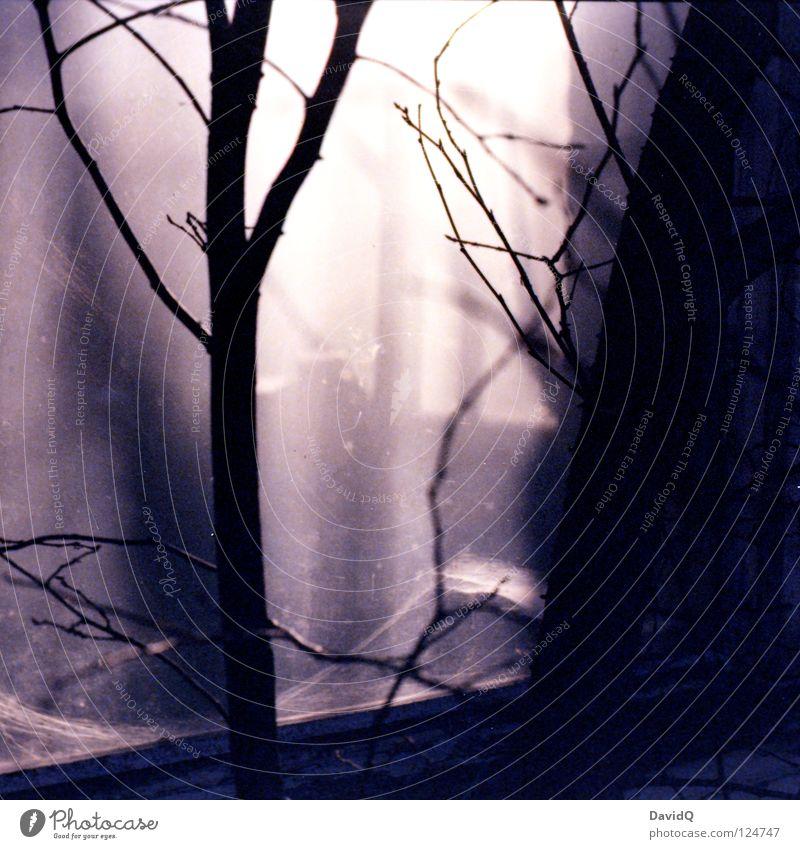 am fenster Fenster Baum Licht Strahlung Sonnenstrahlen Beleuchtung durchleuchtet Werkstatt Handwerk verfallen Vergänglichkeit Glas Fensterscheibe Ast Zweig