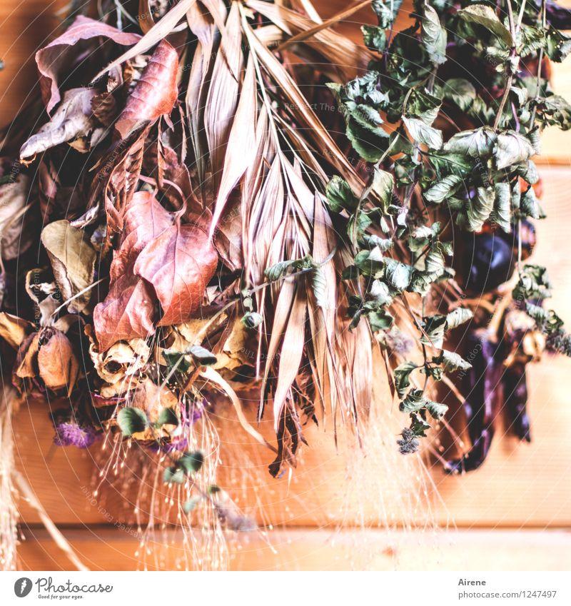 im Trockenen Lebensmittel Kräuter & Gewürze Bioprodukte Vegetarische Ernährung Slowfood Trockenblume Trockenfrüchte Duft dehydrieren Gesundheit lecker natürlich
