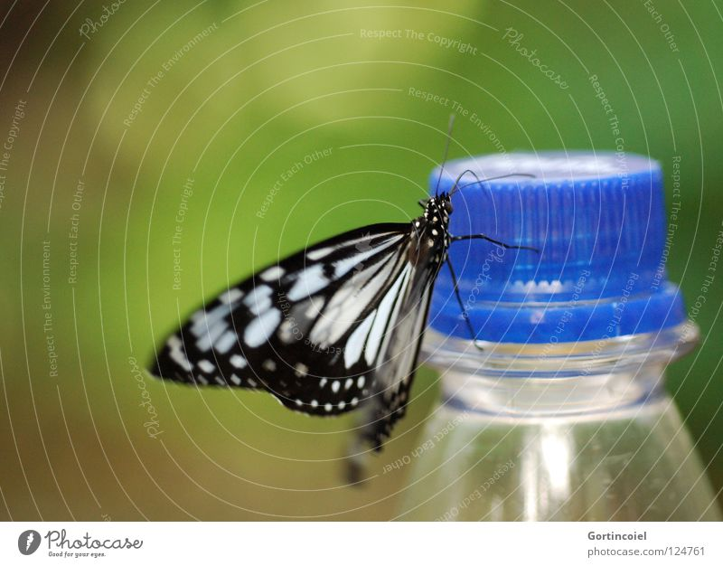 Schmetterviech IV Natur grün weiß schön Blume Freude schwarz Tier Farbe gelb Beine elegant sitzen fliegen süß Flügel