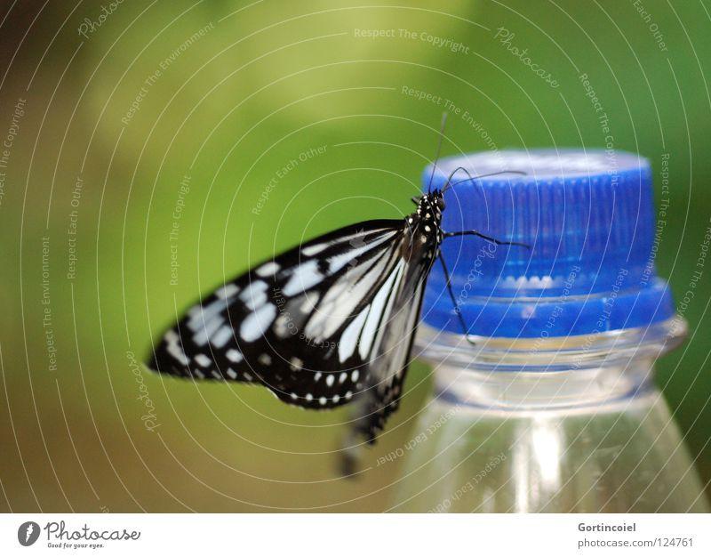 Schmetterviech IV Schmetterling Insekt Tier Rüssel Staubfäden Fühler Blume Stengel flattern fein filigran leicht sensibel weich süß schön zart edel Pause ruhen