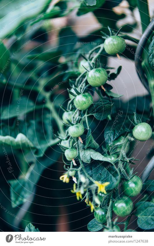 urban gardening tomaten anbau Natur Sommer Gesunde Ernährung Freude Leben Glück Garten Lebensmittel Freizeit & Hobby Wachstum elegant Blühend Gemüse Wohlgefühl