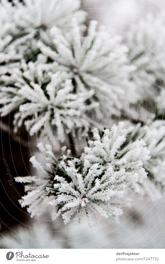 Winterblume Natur Ferien & Urlaub & Reisen Pflanze Weihnachten & Advent weiß Landschaft Tier Winter Wald Berge u. Gebirge Umwelt Gefühle Schnee Eis Wetter Klima