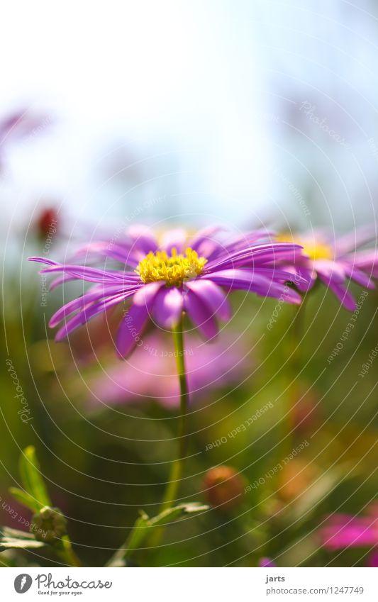 mein garten Natur Pflanze Schönes Wetter Blume Blüte Grünpflanze Garten ästhetisch Duft frisch glänzend hell natürlich schön Farbfoto mehrfarbig Außenaufnahme