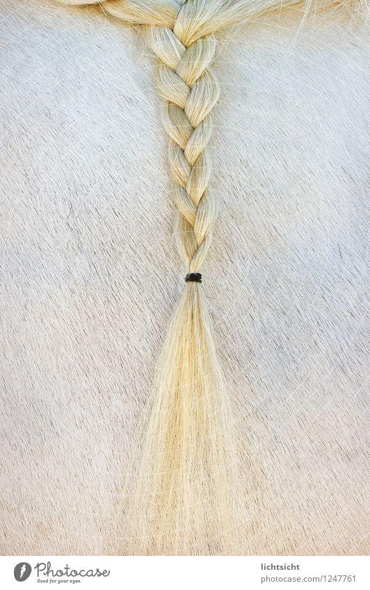 Blondie Haare & Frisuren blond langhaarig Zopf Behaarung Tier Pferd Fell 1 gelb weiß Haarband geflochten Reiten Reitsport Reiterfest Fellfarbe Fellpflege Ponys
