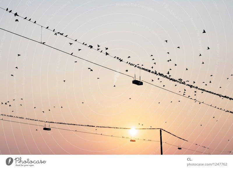 vögel Umwelt Natur Himmel Wolkenloser Himmel Sonne Sonnenaufgang Sonnenuntergang Sonnenlicht Wetter Schönes Wetter Tier Vogel Schwarm Hochspannungsleitung