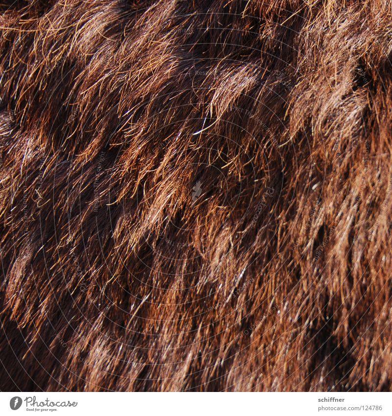 Verkorxte Dauerwelle Fell Wellen Wolle buschig Zottel Borsten Fellpflege Haare & Frisuren braun rotbraun Sträucher Säugetier Wollesel Verunglückte Dauerwelle