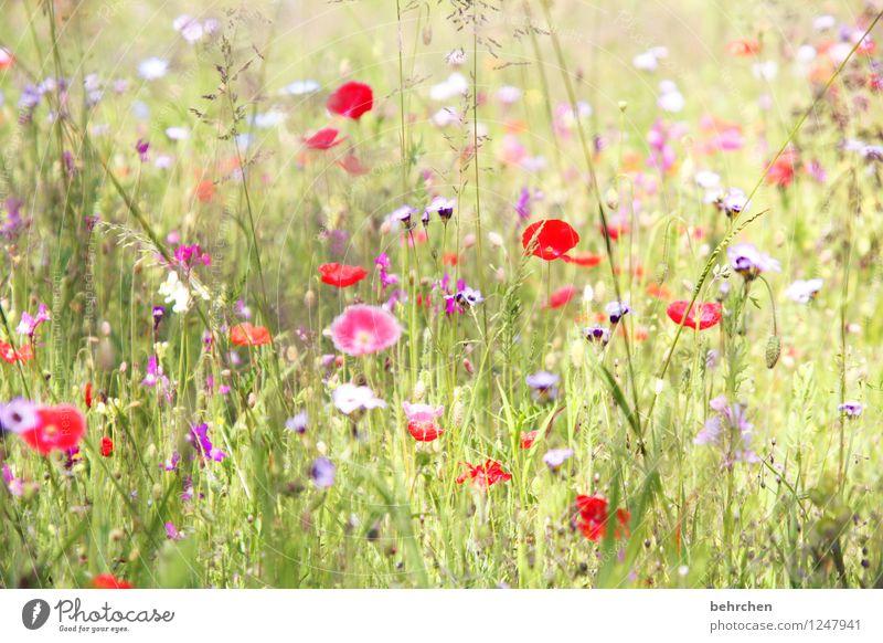 schönen mo(h)ntag allen! Natur Pflanze grün Sommer Blume rot Blatt Blüte Frühling Wiese Gras Garten rosa Park Wachstum