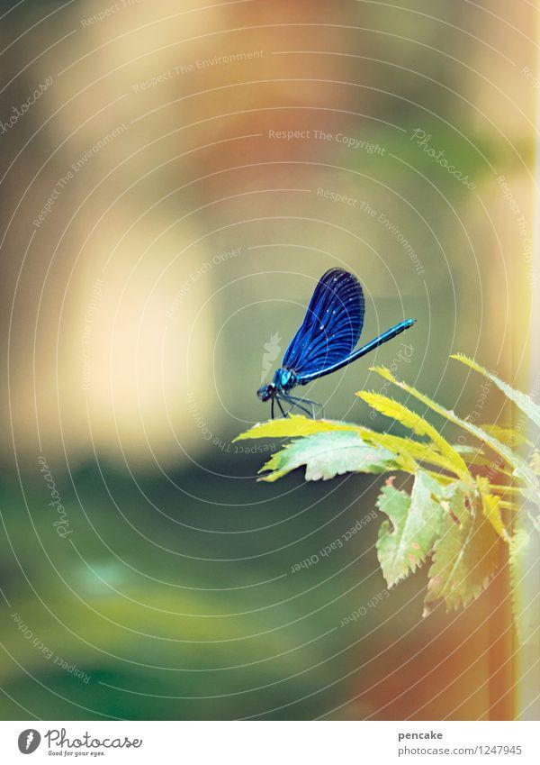 blaustich Natur Blatt Tier Wald außergewöhnlich träumen elegant Idylle ästhetisch beobachten Schönes Wetter berühren Zweig bizarr atmen