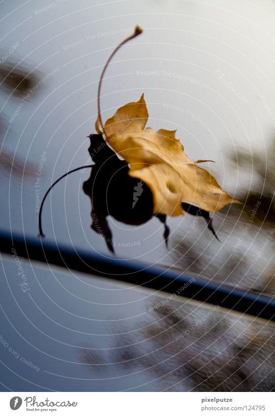 landeanflug Blatt Herbst welk Baum Reflexion & Spiegelung Insekt graphisch unbeständig Baumkrone Physik Fühler schön clean pixelputze Schatten alt fliegen