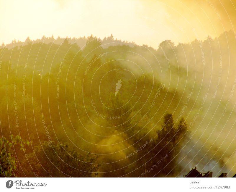 Rauchwald Umwelt Natur Landschaft Feuer Luft Sonnenaufgang Sonnenuntergang Sonnenlicht Klimawandel Nebel Baum Wald Stimmung Endzeitstimmung Hoffnung Horizont
