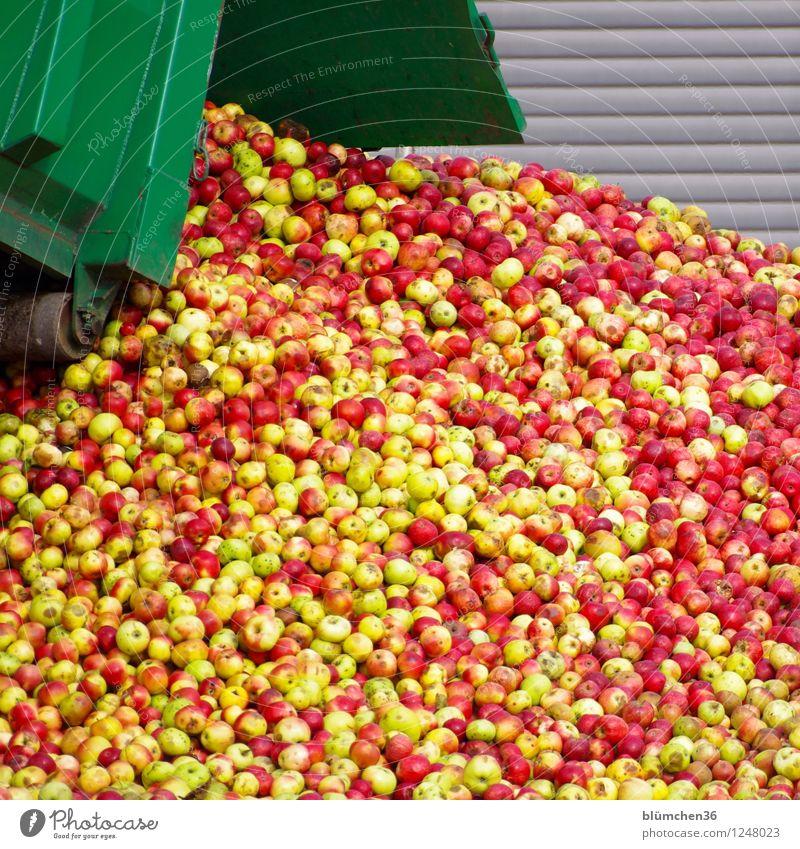 Apfelsaft - Vorstufe Lebensmittel Frucht Saft viele Ernte Ernährung rein genießen Herbst reif Bioprodukte Apfelernte Haufen frisch saftig verarbeiten Lastwagen