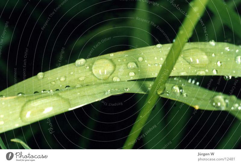 Morgentau Natur Wasser grün Pflanze Gras Wassertropfen nass Tau