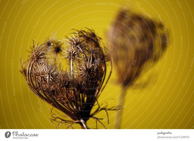 Gelb Natur weiß schön Pflanze Blume Winter schwarz gelb Farbe dunkel Wiese Herbst Blüte Umwelt braun 2