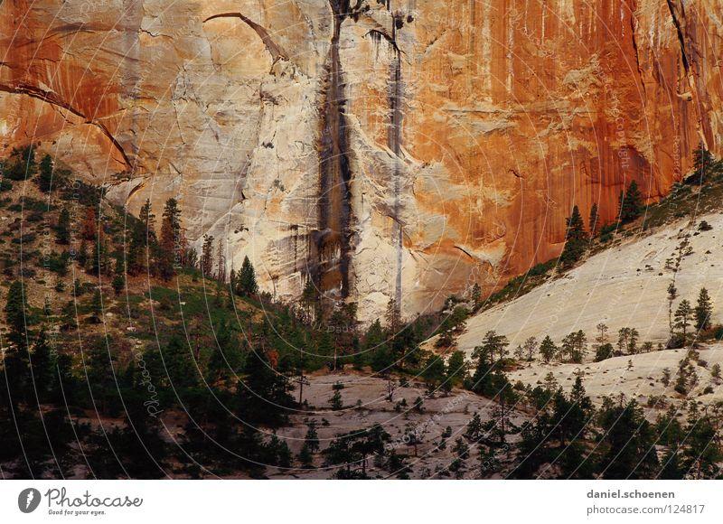 Kletterfelsen XXL Felswand steil Erosion Sandstein Zion National Park Utah Ferien & Urlaub & Reisen Amerika Bergsteigen wandern Hintergrundbild rot beige Baum