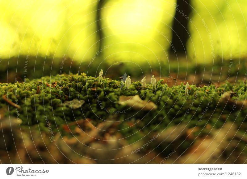 nach fünf im urwald. Mensch Natur grün Sommer Tier Wald Umwelt Wege & Pfade natürlich klein Menschengruppe braun Zusammensein Ausflug Zusammenhalt Moos