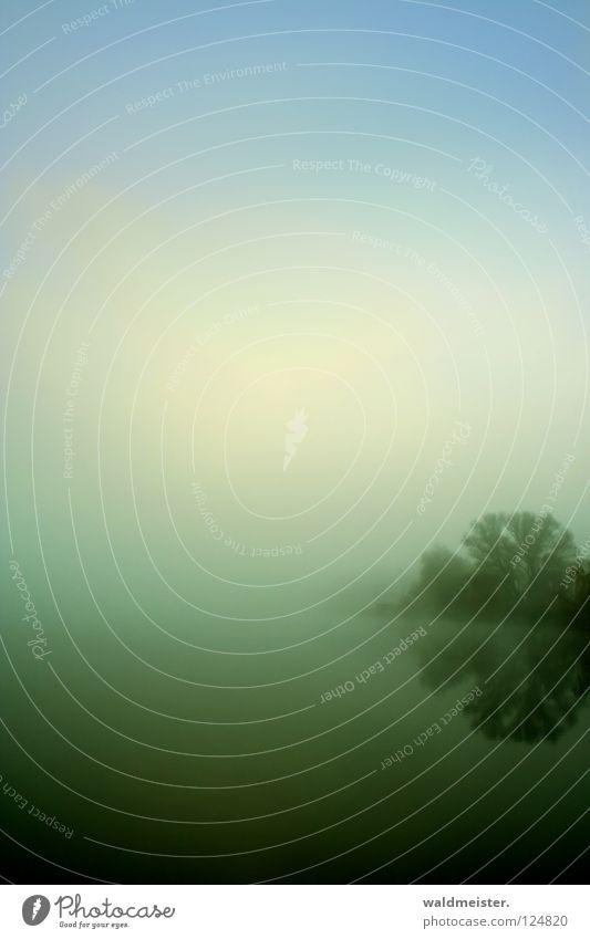 See am Morgen Wasser Himmel Baum ruhig kalt Herbst Traurigkeit Nebel Romantik mystisch Morgennebel