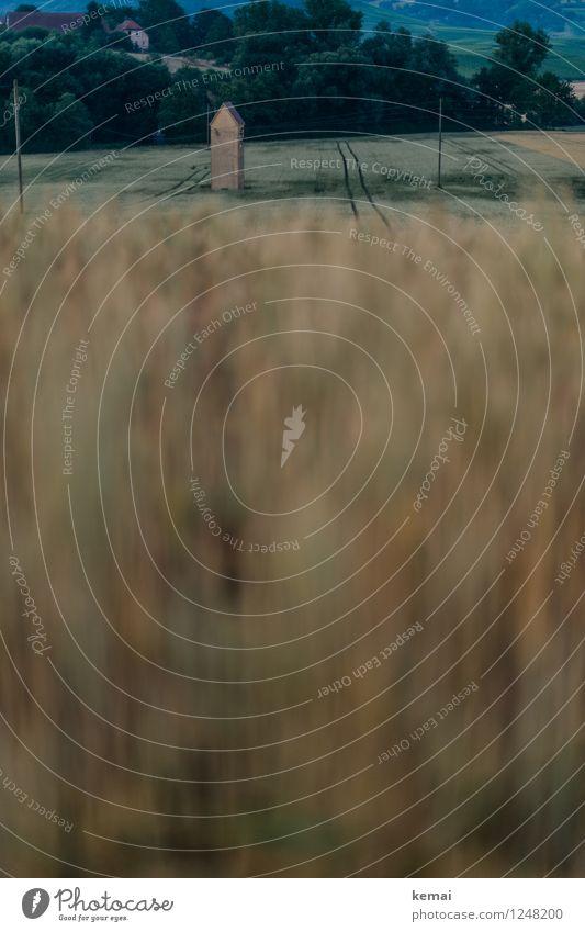 Im Feld Umwelt Natur Landschaft Sommer Pflanze Baum Nutzpflanze Gerste Gerstenfeld Turm Wachstum außergewöhnlich dunkel Stimmung ruhig Spuren Landleben Farbfoto