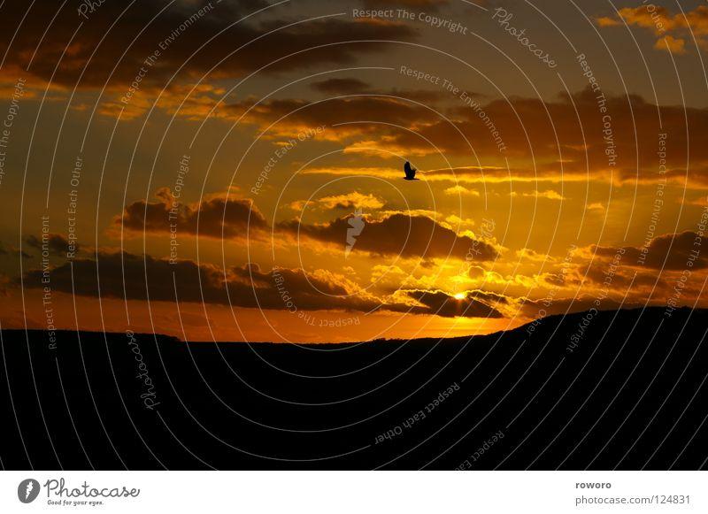 Abendsonne Sonnenuntergang Vogel Abenddämmerung Horizont ruhig Außenaufnahme Trauer Verzweiflung Panorama (Aussicht) Berge u. Gebirge Natur Himmel Greifvogel