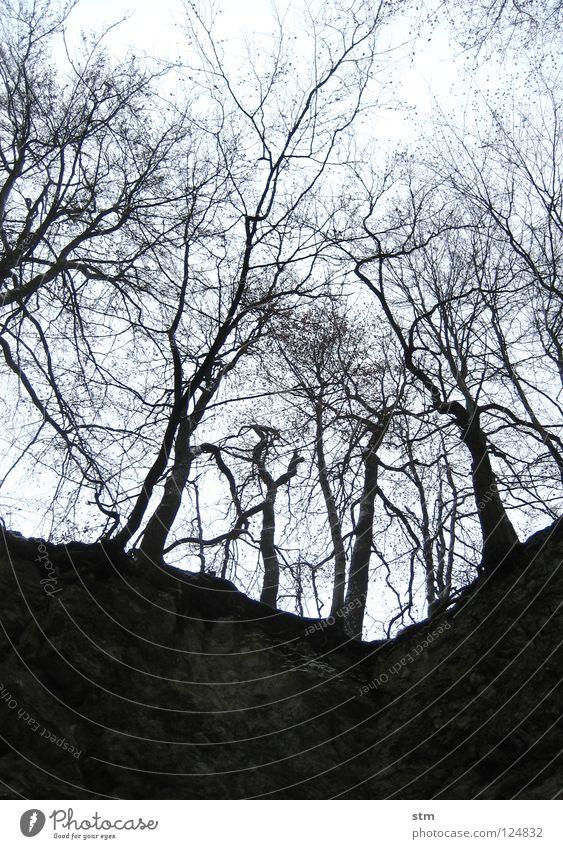 stille 3 Himmel Baum Einsamkeit ruhig Winter Wald Traurigkeit Tod Stein Perspektive Ast Hoffnung Trauer unten Verzweiflung Loch