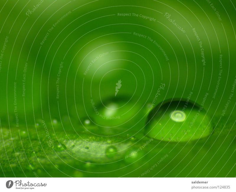Wassertropfen Natur grün ruhig Lampe Reflexion & Spiegelung beruhigend