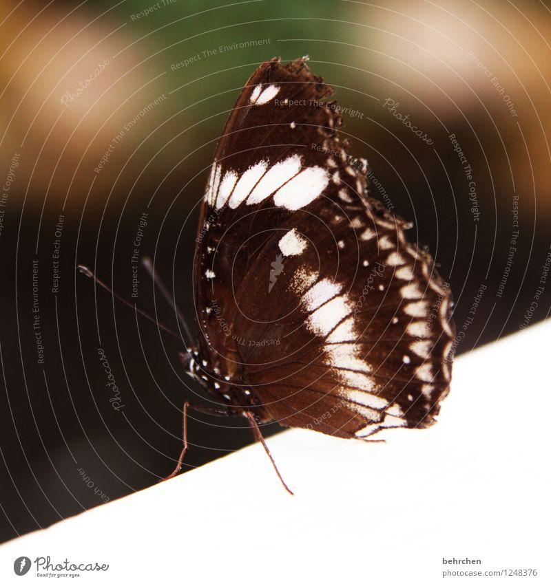suizidgefahr? Natur schön Sommer weiß Erholung Tier Traurigkeit Frühling außergewöhnlich fliegen braun Wildtier Flügel beobachten Hoffnung Höhenangst
