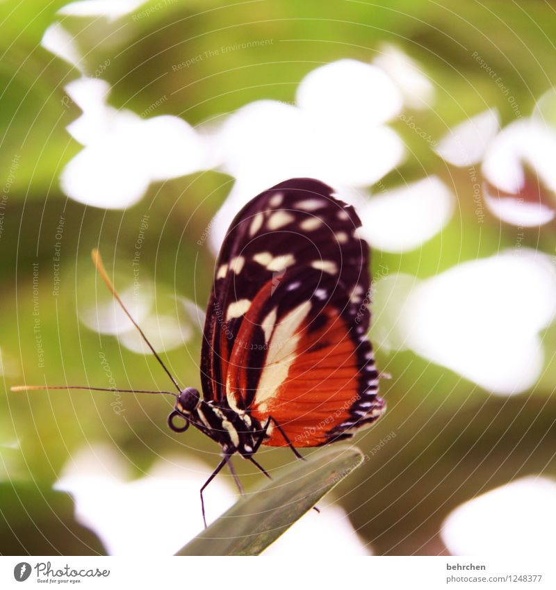 was willste? Natur Pflanze schön Sommer Baum Erholung Blatt Tier Blüte Frühling Wiese Garten außergewöhnlich Beine fliegen orange