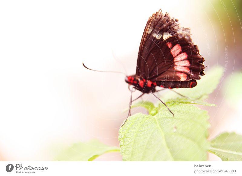 zerzaust Natur Pflanze schön Sommer Baum Erholung rot Blatt Tier Frühling Wiese klein Garten außergewöhnlich Beine fliegen