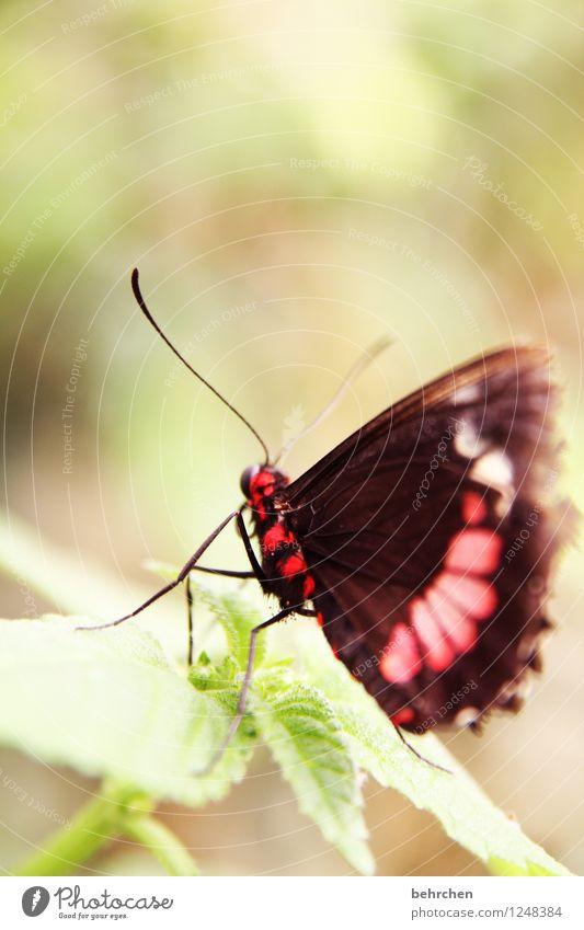 giftig? Natur Pflanze schön Baum Erholung Blatt Tier Wiese Beine Garten außergewöhnlich fliegen Park elegant Wildtier Sträucher