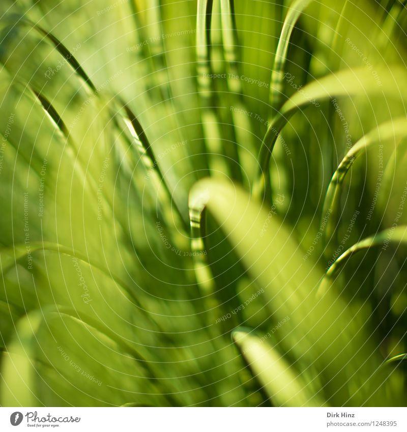Gräser Q Natur Pflanze grün Sommer Blatt Umwelt Frühling Wiese Gras natürlich Garten wild Wachstum frisch elegant Perspektive